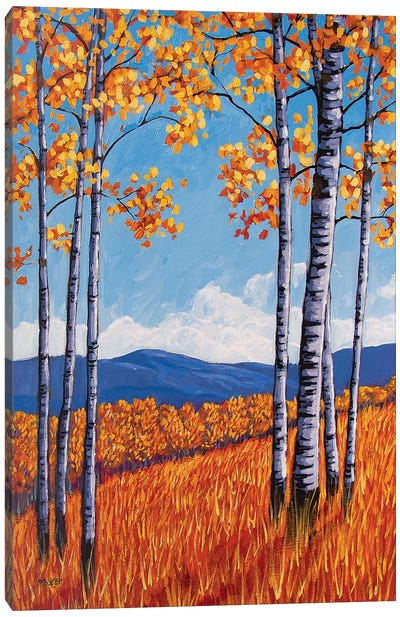 Aspens On the Western Slope, Colorado Canvas Art Print