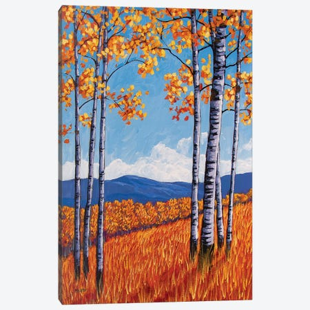 Aspens On the Western Slope, Colorado Canvas Print #PTB164} by Patty Baker Art Print
