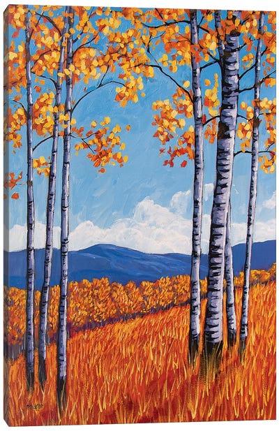 Aspens On the Western Slope, Colorado Canvas Art Print