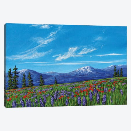 Colorado High Country Wildflowers Canvas Print #PTB176} by Patty Baker Canvas Art