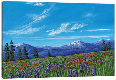 Colorado High Country Wildflowers Canvas Art Print