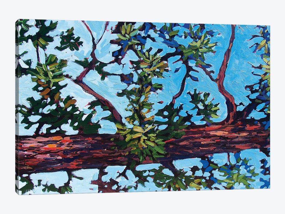 Colorado Pine by Patty Baker 1-piece Canvas Art Print
