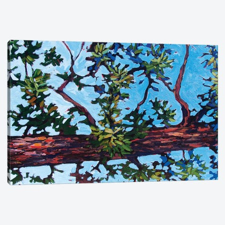 Colorado Pine 3-Piece Canvas #PTB177} by Patty Baker Canvas Art