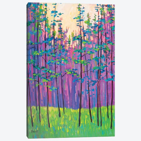 Forest Landscape Canvas Print #PTB189} by Patty Baker Canvas Artwork