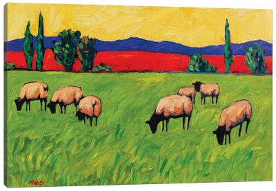 Grazing Sheep  Canvas Art Print