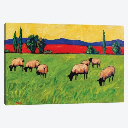 Grazing Sheep  Canvas Print #PTB195} by Patty Baker Canvas Artwork