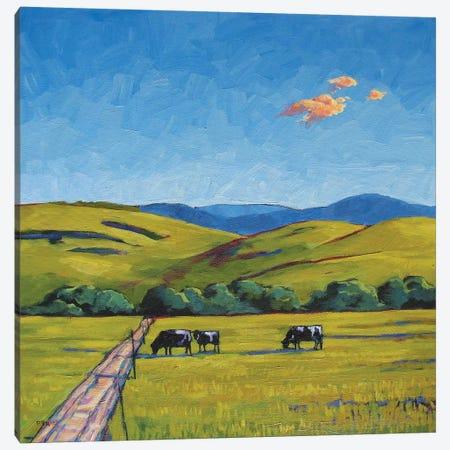 Boulder County Cows Canvas Print #PTB23} by Patty Baker Art Print