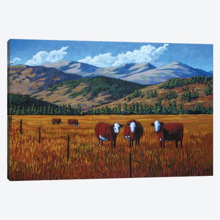 Curious Cows in the San Juan Valley, Colorado 3-Piece Canvas #PTB36} by Patty Baker Canvas Print