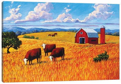 Grazing Cows and Barn Canvas Art Print