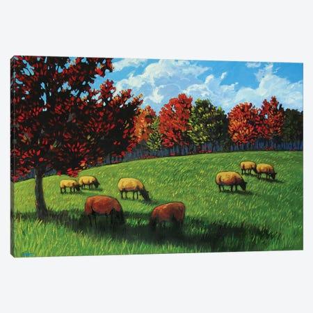 Grazing Sheep Rhinebeck  Canvas Print #PTB57} by Patty Baker Art Print