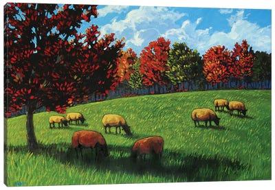 Grazing Sheep Rhinebeck  Canvas Art Print
