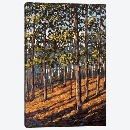 Late Day Light in the Hudson Valley Woods 3-Piece Canvas #PTB71} by Patty Baker Canvas Wall Art