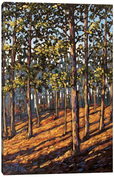 Late Day Light in the Hudson Valley Woods Canvas Art Print