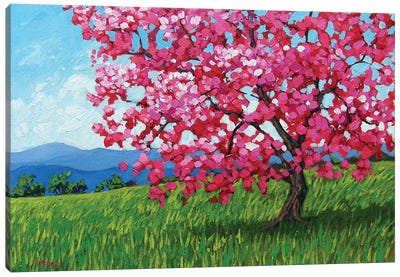 Lone Pink Blossom Tree Canvas Art Print
