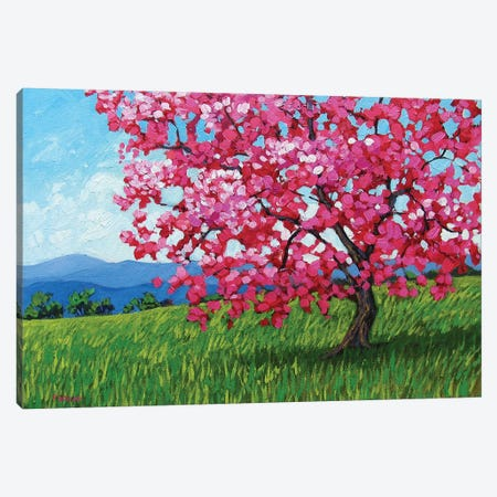 Lone Pink Blossom Tree Canvas Print #PTB76} by Patty Baker Canvas Print