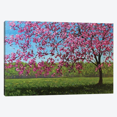Afternoon Pink Blossoms Canvas Print #PTB7} by Patty Baker Art Print