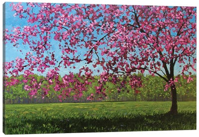 Afternoon Pink Blossoms Canvas Art Print