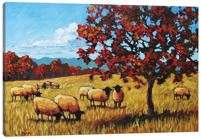 Autumn Grazing Sheep Canvas Art Print