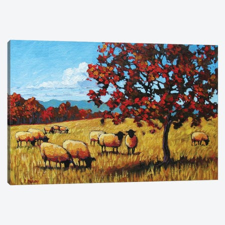 Autumn Grazing Sheep Canvas Print #PTB8} by Patty Baker Canvas Artwork