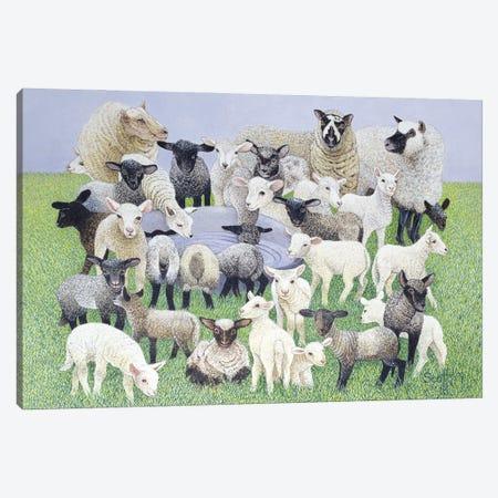 Feeling Sheepish Canvas Print #PTS10} by Pat Scott Canvas Print