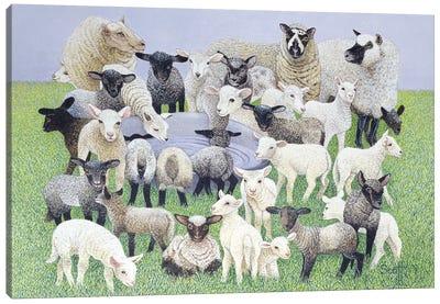 Feeling Sheepish Canvas Art Print