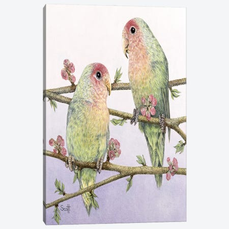Love Birds Canvas Print #PTS13} by Pat Scott Canvas Art Print