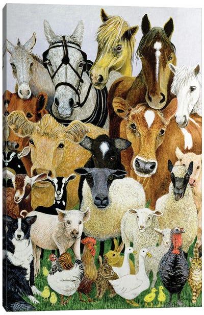 Animal Allsorts Canvas Art Print