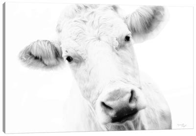 Cow IV Canvas Art Print