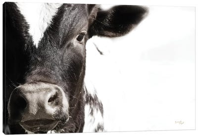 Cow VII Canvas Art Print