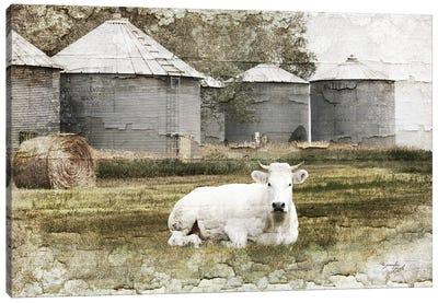 White Cow Canvas Art Print