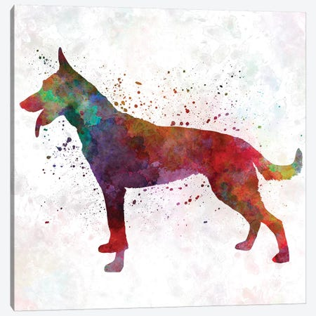 Dutch Shepherd Dog In Watercolor Canvas Print #PUR219} by Paul Rommer Canvas Print