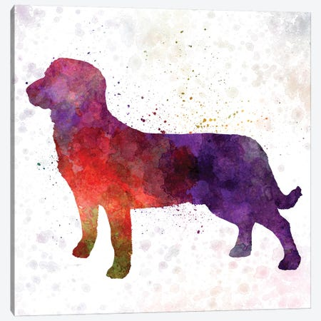 Entlebuch Cattle Dog In Watercolor Canvas Print #PUR237} by Paul Rommer Canvas Art