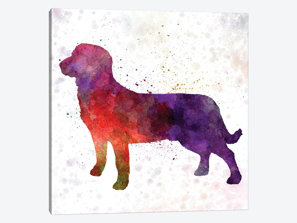Entlebuch Cattle Dog In Watercolor by Paul Rommer 1-piece Canvas Wall Art