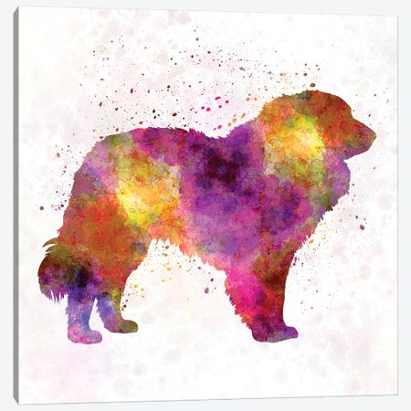 Estrela Mountain Dog In Watercolor Canvas Print #PUR238} by Paul Rommer Canvas Art Print