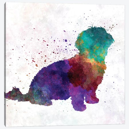 Havanese In Watercolor Canvas Print #PUR325} by Paul Rommer Canvas Art