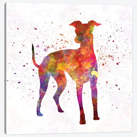 Italian Greyhound In Watercolor Canvas Print #PUR378} by Paul Rommer Canvas Art