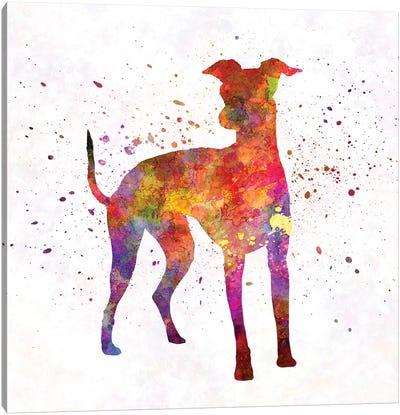 Italian Greyhound In Watercolor Canvas Art Print