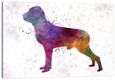 Italian Pointer In Watercolor Canvas Art Print
