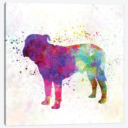 Majorca Mastiff In Watercolor Canvas Print #PUR440} by Paul Rommer Canvas Art