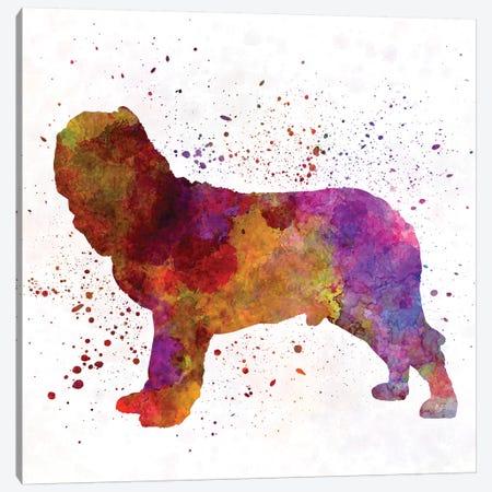 Napolitan Mastiff In Watercolor Canvas Print #PUR522} by Paul Rommer Art Print