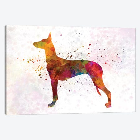 Pharaoh Hound In Watercolor Canvas Print #PUR571} by Paul Rommer Canvas Art