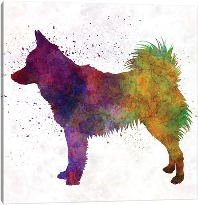 Schipperke In Watercolor Canvas Art Print