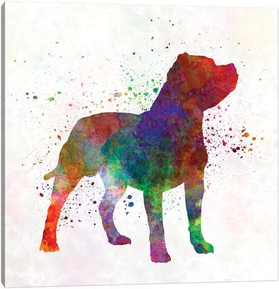 Staffordshire Bull Terrier In Watercolor Canvas Art Print