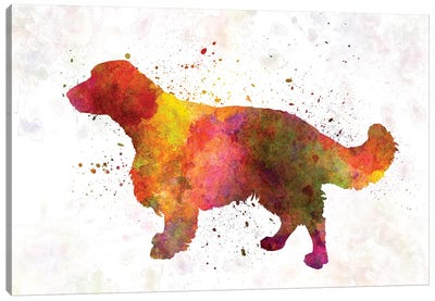 Welsh Springer Spaniel In Watercolor Canvas Art Print