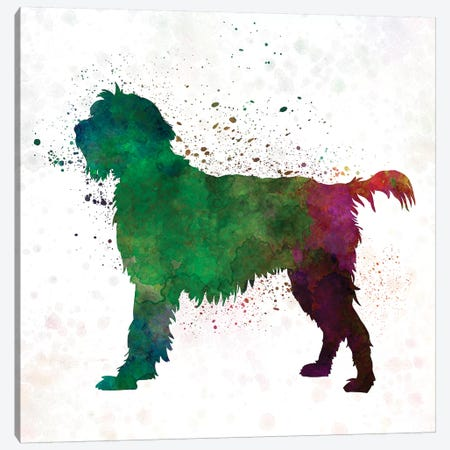 Wirehaired Pointing Griffon Korthals In Watercolor Canvas Print #PUR751} by Paul Rommer Canvas Wall Art