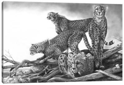 Vantage Canvas Art Print