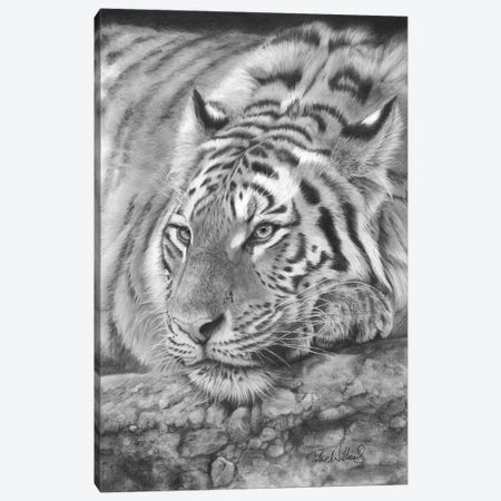 Easy Tiger Canvas Print #PWI145} by Peter Williams Canvas Wall Art