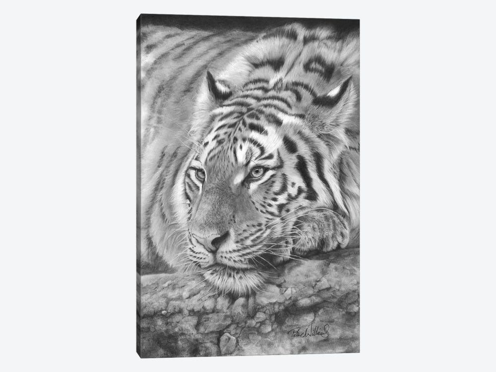Easy Tiger by Peter Williams 1-piece Art Print