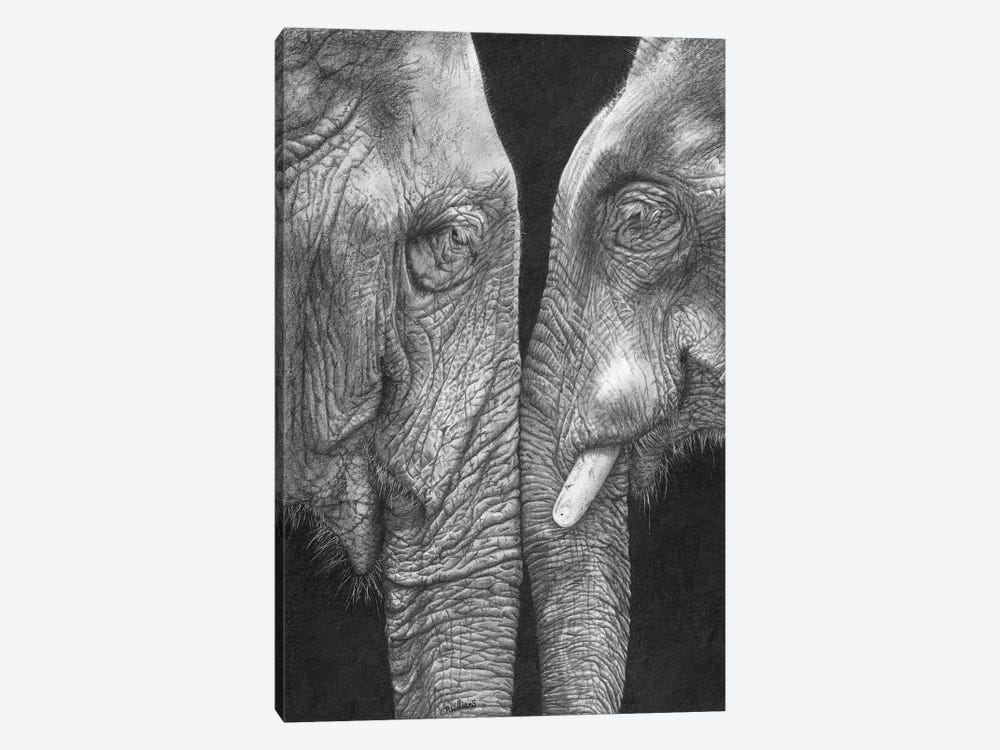 Eye To Eye by Peter Williams 1-piece Canvas Wall Art