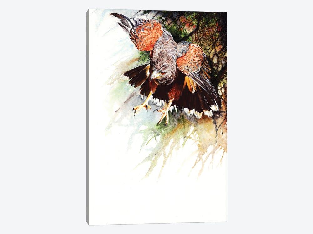 Raptor by Peter Williams 1-piece Canvas Art Print